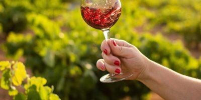 Factores que marcan la diferencia entre los vinos
